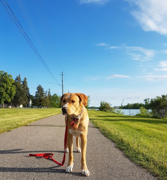 Loose-Leash Training Membership $230